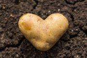 Kartoffel-Ritual II Foto: © Lenslife.jpeg @ AdobeStock