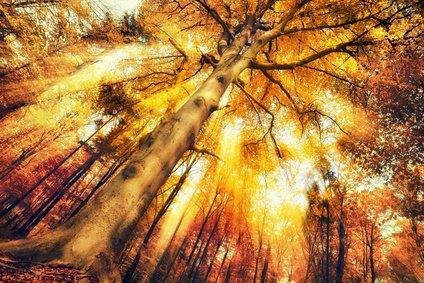 Glück, Frieden, Ritual Foto: ©  Smileus @ Fotolia