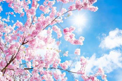 Blüten, Früchte, Gesundheit, Energien, Fähigkeiten, Blütenenergien, Energie Foto: ©  eyetronic @ Fotolia