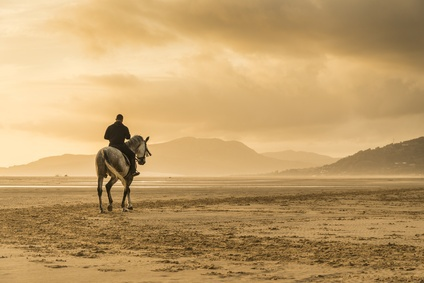 Der alte Mann und das Pferd, Geschichte, Morgaine la Fay, Zukunftsblick, Seherin Morgaine la Fay Foto: ©  Andrew Lever @ Fotolia