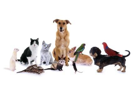 Haustiere, Katze, Hund, Stressbewältigung, Tier-Mensch Beziehung, Tier, Tiere Foto: ©  grafikplusfoto @ Fotolia