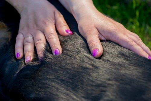 Massage am Tier, Möglichkeit, Übungen,  Foto: ©  Anna Maloverjan @ shutterstock