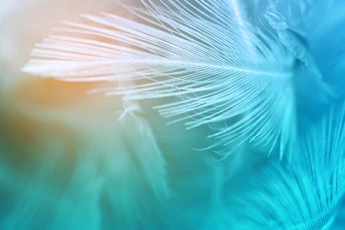 Seelengespräche, Engelgesang Foto: ©  nadtytok @ shutterstock