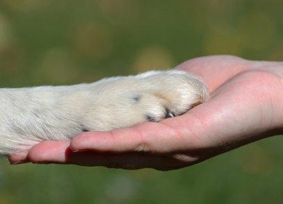 Tierkommunikation,Tier-Energetik,Energiefeld Foto: ©  kontessina @ Fotolia