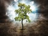 Baum des Lebens Foto: ©  Haywiremedia @ shutterstock