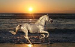 Krafttier Pferd  Foto: ©  Ideas_everything @ shutterstock