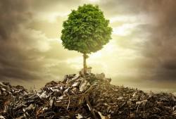 Lebensbaum  Foto: ©  lassedesignen @ AdobeStock