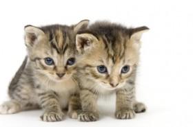 Tierkommunikation testen Foto: ©  Tony Campbell @ Fotolia