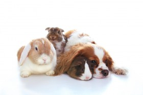 Telepathie, Tiertelepathie, Katze, Hund, Tiere Foto: ©  Nalaphotos @ shutterstock