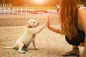 Tierkommunikation erlernen,mit Tieren kommunizieren Foto: ©  manushot @ shutterstock
