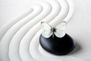 Aromatherapie - Die Kraft der ätherischen Öle  Foto: ©  vetre @ Fotolia
