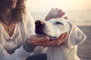 Tierkommunikation im Alltag leichtgemacht  Foto: ©  FCSCAFEINE @ shutterstock