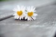 Liebeszauber - Hilfe in Liebesangelegenheiten  Foto: ©  Peter Heckmeier @ Fotolia