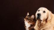 Verstorbenen Hund oder Katze kontaktieren  Foto: ©  Tania Wild @ shutterstock