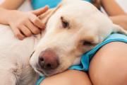 Reiki bei Tieren: Nervosität behandeln  Foto: ©  Ilike @ shutterstock