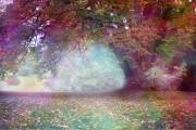 Ritual: Kraft der Bäume richtig nutzen  Foto: ©  Nikki Zalewski @ shutterstock