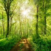 Waldbaden – Eine Wohltat für Körper, Geist und Seele  Foto: ©  dugdax @ shutterstock