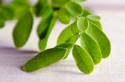 Moringa Oleifera: der Wunderbaum  Foto: ©  SK Herb @ shutterstock