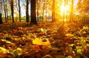 November:  Der Monat von Abschied und Neubeginn Foto: ©  irin_k @ shutterstock