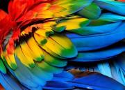 Die Farben des Lebens  Foto: ©  Super Prin @ shutterstock