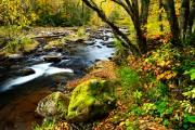 Waldbaden: Shinrin-Yoku   Foto: ©  Malachi Jacobs @ shutterstock