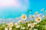 Vom Suchen, Finden oder einfach glücklich sein  Foto: ©  LedyX @ shutterstock