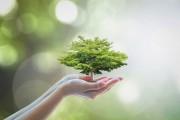 Der Lebensbaum  Foto: ©  Chinnapong @ shutterstock